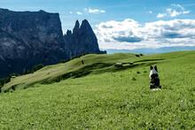 Border Collie Dog Admiring The Panorama On Alpe Di Siusi, Dolomites, Trentino-Alto Adige, Italy
