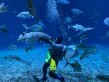 A Diver Petting A Shark In While Feeding The Fish