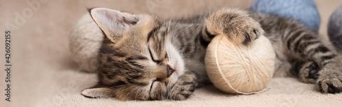 Fotografie, Obraz Cute sleeping tabby kitten with balls of wool panoramic banner