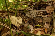 Rana Dardo En Medio De La Selva Del Darien