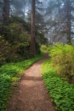United States, Oregon, Sunlight On Path In Forest