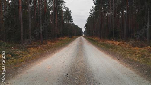 Fototapeta Droga pośrodku lasu  obraz