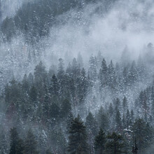 United States, Idaho, Cascade, Clouds And Fog Over Forest In Mountains In Winter