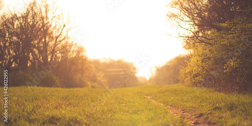 Beautiful natural landscape of the forest woods with a dirt path during the golden hour