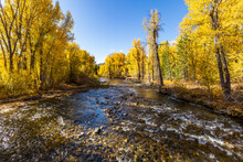 United States, Idaho, Sun Valley, Big Wood River With Autumn Trees