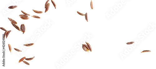 Fototapeta Caraway seeds isolated on a white background. obraz