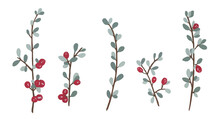Isolated Gouache Hand Painted Red Cotoneaster Berries On White Background.  Evergreen Winter Berries.  Botanical Foliage