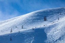 United States, Idaho, Sun Valley, Solitary Trees On Snowy Slope