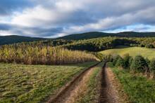 United States, Virginia, Dirt Track In Rural Field