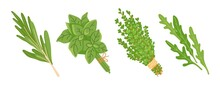 Arugula, Basil, Thyme And Rosemary Sprigs. Fresh Herbs, Isolated On White Background. Hand-drawn Vector Illustration.