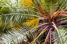 Detail Of The Leaves Of A Palm Tree