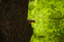 Squirrel Warns Away Another Squirrel While Perched In A Tree