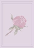Composition of pink rose with purple frame on pink background