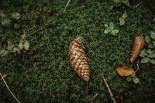 Dry Pine Cone On The Grassy Ground