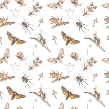 Watercolor Seamless Pattern With Moths, Ant, Beetle, Spider, Snail, Mushroom, Branches On A White Background