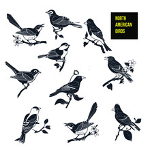 North American Birds Icon - Stock Illustration.Various North American Birds Featuring A Chickadee, Purple Finch, Robin, Hermit Thrush, Baltimore Oriole, Bluebird, Goldfinch, Mockingbird, Cardinal