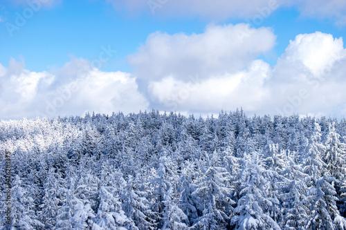 Fototapeta Las widziany z góry w słoneczny dzień zimą obraz