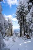 Widok w lesie zimą w piękny słoneczny dzień, góry w tle
