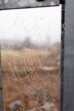 Spider Web Attached To Metal Fence Covered With Morning Dew. Water Droplets On Spider Trap. Brown Vegetation Out Of Focus In The Background. Abstract Nature Background.
