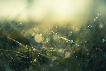 Green Grass With Morning Dew At Sunrise. Macro Image, Shallow Depth Of Field. Blurred Summer Nature Background
