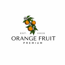 Orange Fruit Logo Drawing Illustration Template Vector Icon Idea