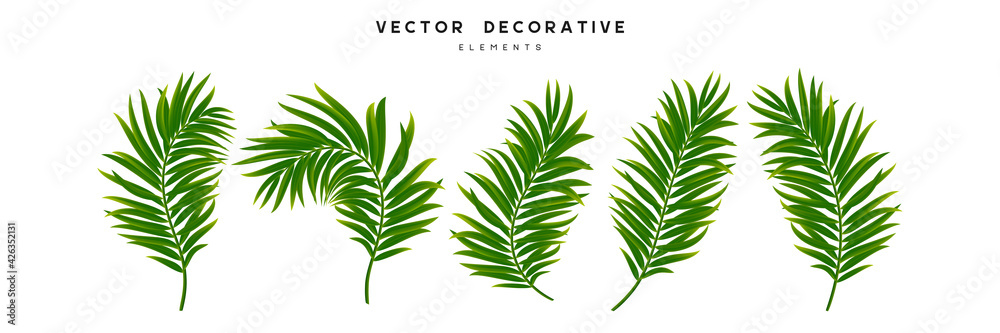 Fototapeta Set of palm leaves isolated on white background. Exotic tropical leaves for summer jungle design. Vector illustration.