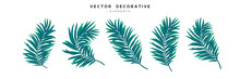 Set Of Palm Leaves Isolated On White Background. Exotic Tropical Leaves For Summer Jungle Design. Vector Illustration.