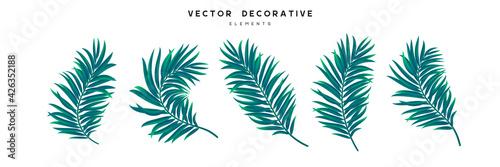 Set of palm leaves isolated on white background Fototapeta