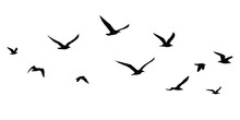 Silhouettes Of Birds Set. Seagulls In Flight Isolated. Migration Of Birds. Vector Stock Illustration