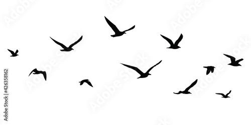silhouettes of birds set Fototapet