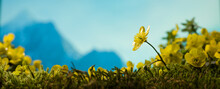 The Yellow Flowers Of Spring In The Mountains