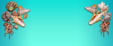 Groupe De Beaux Coquillages Sur Fond Dégradé Bleu Turquoise - Concept Voyage Vers Des Plages Exotiques