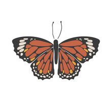 Abstract Spring Colorful Butterfly, Boho Butterfly Vector, Isolated Spring Insect, Nature Elements, Beautiful Multicolour Drawing Buterfly, Vector Illustration