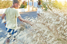 Boy In Yellow T-shirt Touches Wild Oats At Sunset On Summer Late Day In Greece