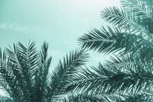Tropical Tourism Paradise Palms Sunny Summer Sun Turquoise Sky. Sun Light Shines Through Leaves Of Palm. Beautiful Wanderlust Travel Journey Symbol For Vacation Trip To Southern Holiday Dream Island