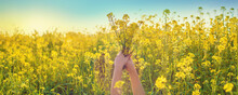 A Child In A Yellow Field, Mustard Blooms. Selective Focus.