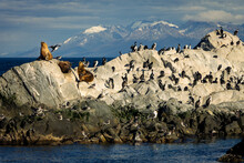Navigation Through The Beagle Channel, Sighting Of Sea Lions And Cormorants, Ushuaia, Patagonia Argentina.