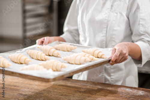 Fotografija Hands with tray of raw croissants prepared for baking