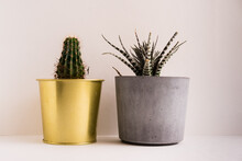 Potted Plants On Table Against White Background