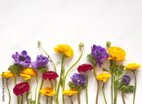 Canvas Flowers layout or mockup: purple anemone red  daisy, yellow ranunculus on white background