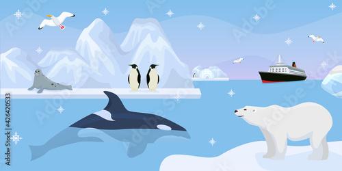 Fototapeta Antarctica beautiful wildlife, vector illustration