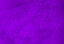 Purple Fur Background Close Up View.