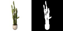 Front View Of Plant (Flowerpot Vase With Tall Cactus 3) Tree Png With Alpha Channel To Cutout Made With 3D Render