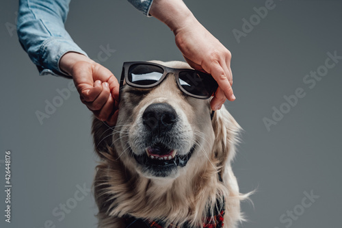Fotografering Man wearing a sunglasses on a beautiful and fashionable doggy