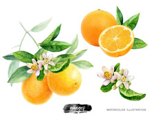 Orange Fruit With Leaves Watercolor Illustration Isolated On White Background