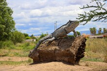 Sculptures Of Giant Iguanas At The Entrance To The Town , One Of The Yaquis Communities In  Mexico. Town Of Iguanas.