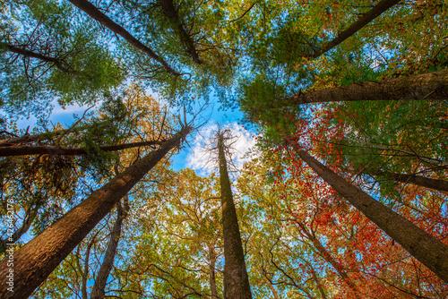 Obraz jesień drzewa w lesie - fototapety do salonu