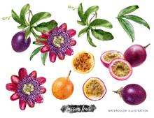Passion Fruit With Leaves And Flower Watercolor Illustration Isolated On White Background