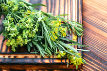 Medicinal Plant Euphorbia Esula, Commonly Known As Green Spurge Or Leafy Spurge Of Milkweed In Bottle With Cork On A Wooden Cutting Board Ready For Cooking Medicines, Medicines Or Drying