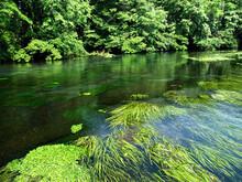 静岡県の柿田川は富士山の伏流水が流れる清流で名高い。バイカモなどの水生の植物が透明度の高い水面に揺れる。